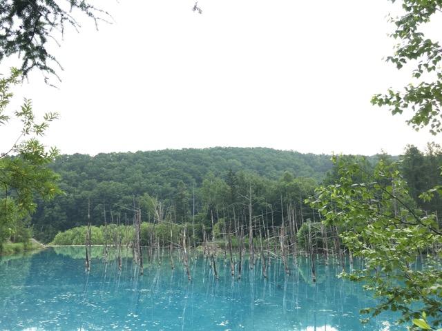 朝の青い池